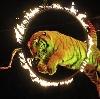 Цирки в Михнево