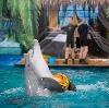 Дельфинарии, океанариумы в Михнево